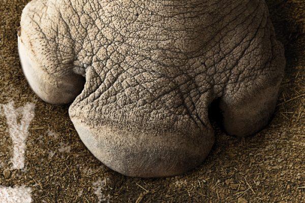 Mohawk Rhino Challenge